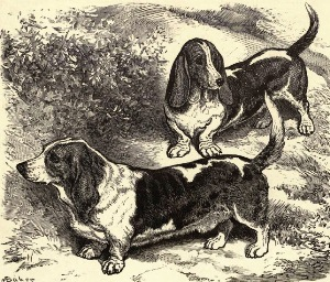 Basset Hounds de George R. Krehl (The Dogs of the British Islands)